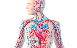 Разновидности и формы атеросклероза сосудов [полная классификация]