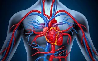 Симптомы, причины и лечение мультифокального атеросклероза