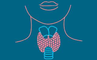 Гипотиреоз и повышенный холестерин: связь между щитовидкой и липидным обменом