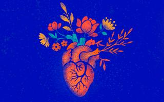 Все про УЗИ сосудов сердца: показания, проведение, результаты