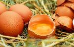 Правда о пользе и вреде яиц при повышенном холестерине
