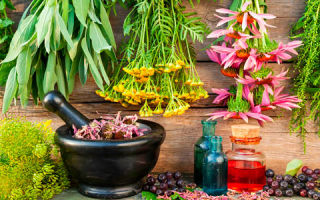 Травы и сборы от повышенного холестерина. Проверенные рецепты народной медицины