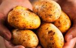 Можно ли есть картофель при повышенном холестерине?