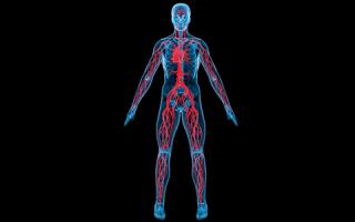 Ангиография — современный метод диагностики состояния сосудов
