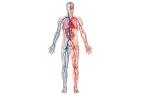 Венография (флебография) — метод диагностики состояния вен