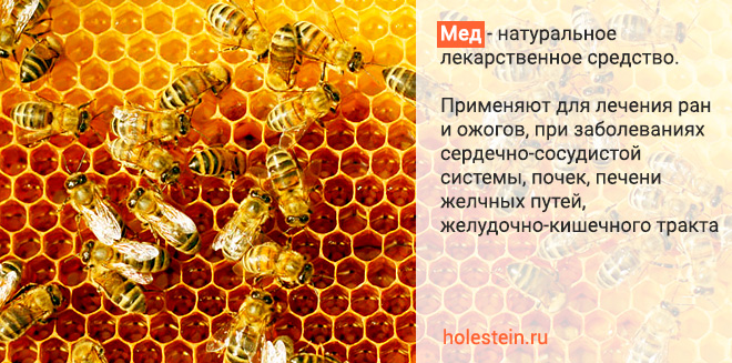 Влияние меда на организм
