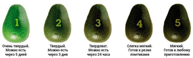 Как выбрать авокадо?