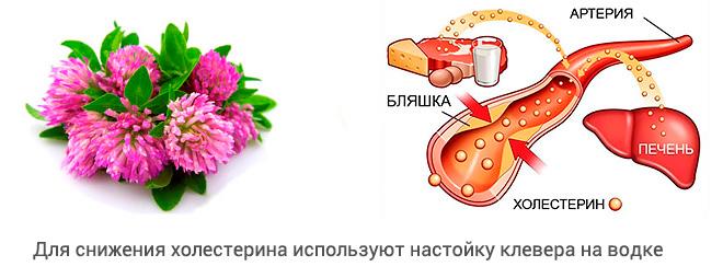 Влияние клевера на холестерин