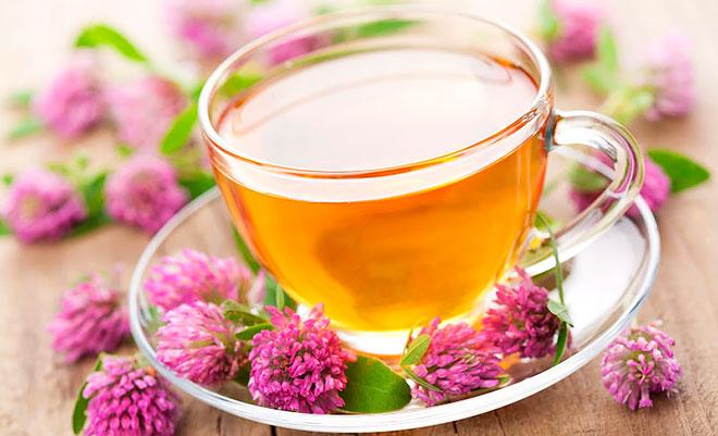 Заваривать клевер чай
