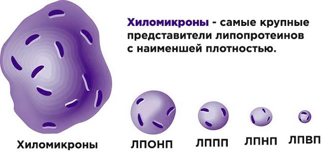 Размер хиломикрона