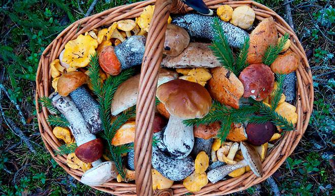 Влияние грибов на холестерин