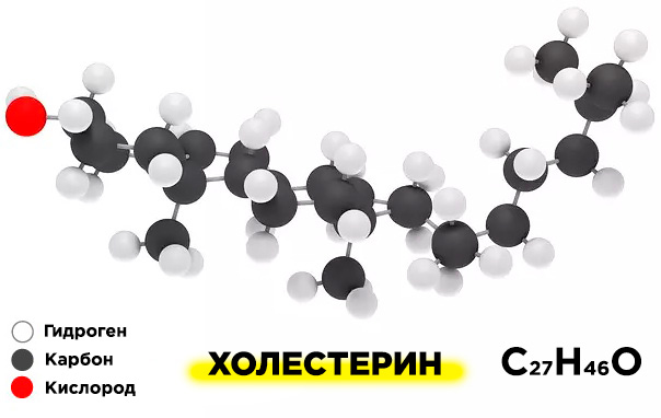 Биохимия холестерина