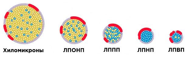 Все виды фракций холестерола