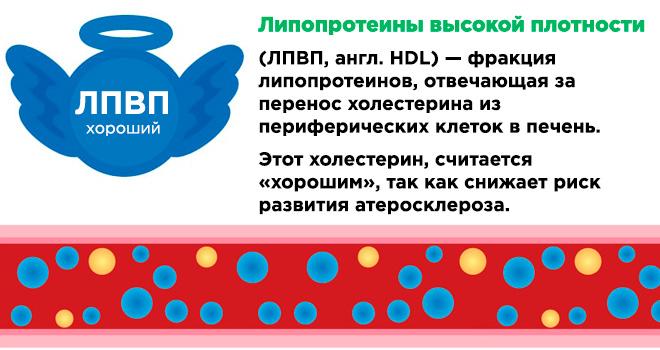 Что такое HDL