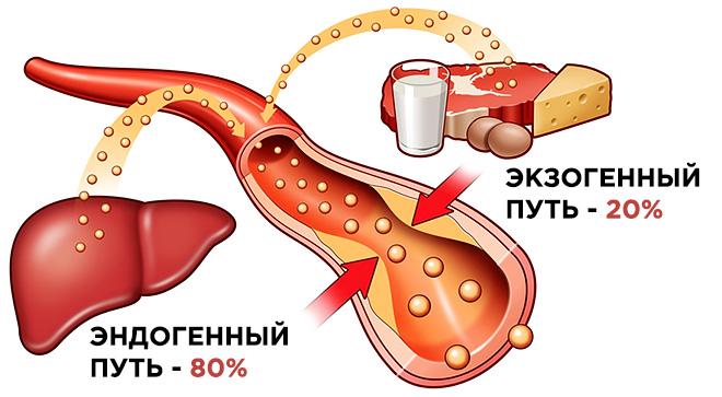 Поступление холестерина в организм