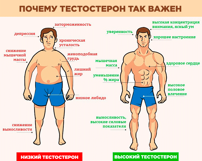 Важность тестостерона