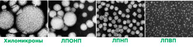 Липопротеины под микроскопом